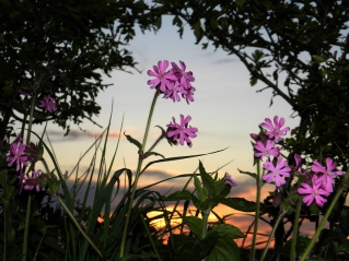 Sunset Flowers by Michael Newton