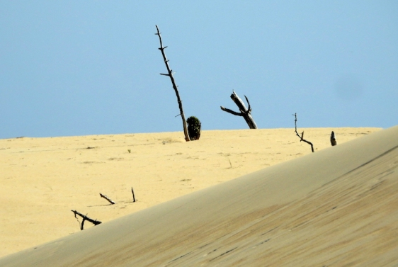 Dune Top by Michael Newton