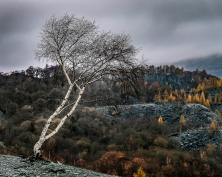 The Lonesome Birch by Simon Garvey