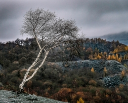 The Lonesome Birch by Simon Garvey